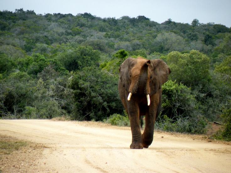 #elephant #elefante #belleza