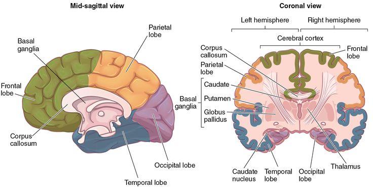 B E E E Dec C C F C A Physical Therapy Anatomy