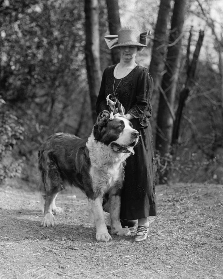 I wish St. Bernards still looked like this.  Breeders have made their heads extreme and unhealthy over the years.