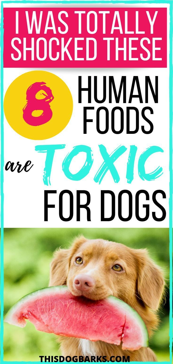 Foods Dogs Can T Eat Never Share These 8 Toxic Foods For Dogs