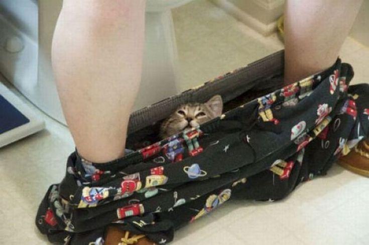 кот в трусах | Смешные фото кошек, Кот и Смешные фото