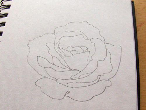 die besten 25 rose gezeichnet ideen auf pinterest stammbaum zeichnung stammbaum zeichnen und. Black Bedroom Furniture Sets. Home Design Ideas