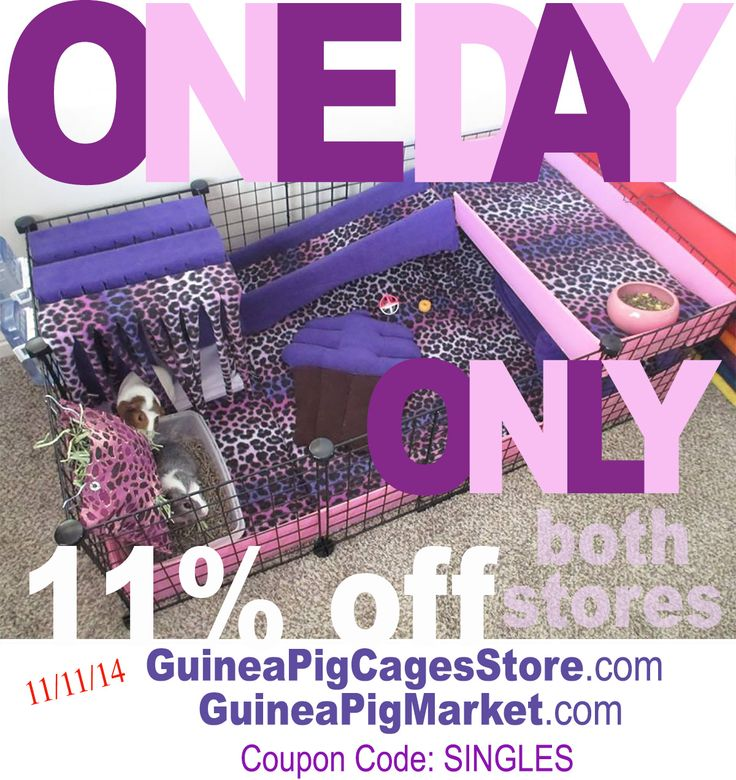 Wheek wheek! www.GuineaPigMarket.com, www.GuineaPigCagesStore.com