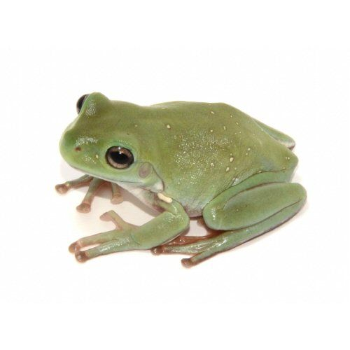 nike shoes keep squeaking frogs and toads for sale 928061