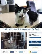 "Posted February 12, 2015 According to a February 11 post by the Humane Society of Tampa Bay, the owner of a Tampa cat has filed a lawsuit against HSTB for the return of the cat who ""returned from the dead."" The post read  ""UPDATE! February 11, 2015- On Tuesday, February 10, 2015, the Humane Society of Tampa Bay was served with official Hillsborough County Court documents notifying the Society that it is being sued by Ellis Wayne Hutson for the custody of Bart the cat."