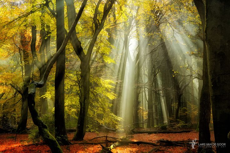 Photo Yellow Leaves Rays by Lars van de Goor on 500px