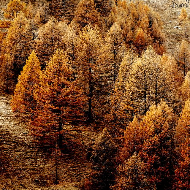 brown: Forests, Copper Shades, Autumn Leaves, Fall Colors, Fall Autumn, Fall Trees, Cozy Sweaters, Autumn Trees, Autumn Splendor