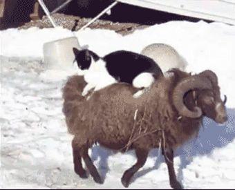 Hilarious Photos of Animals Riding Other Animals