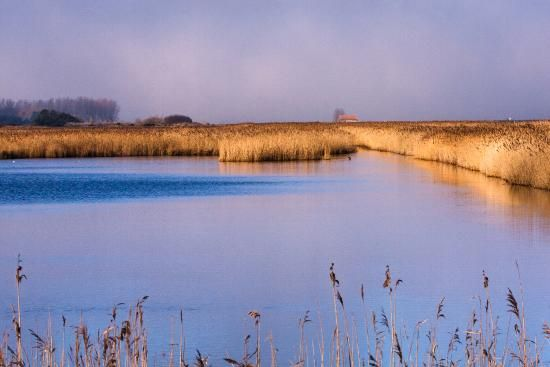 Photos of RSPB Titchwell Marsh, Titchwell - Attraction Images - TripAdvisor