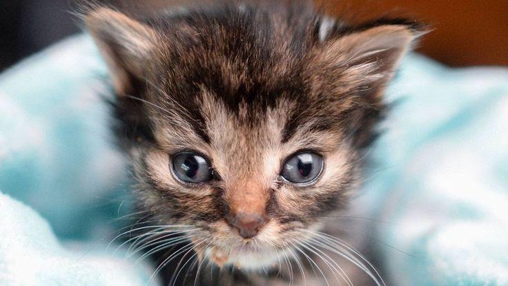 ✔Спасение животных Самый маленький котенок