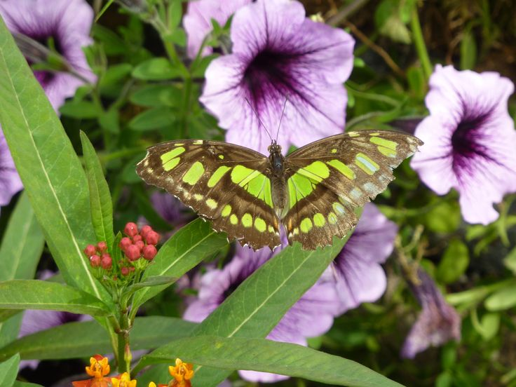 Winnipeg Zoo - Butterfly Conservatory