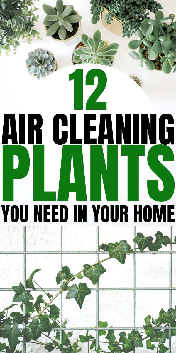 12 Best Air Cleaning Houseplants That Are Impossible To Kill! (no green thumbs neededThe Creek Line House