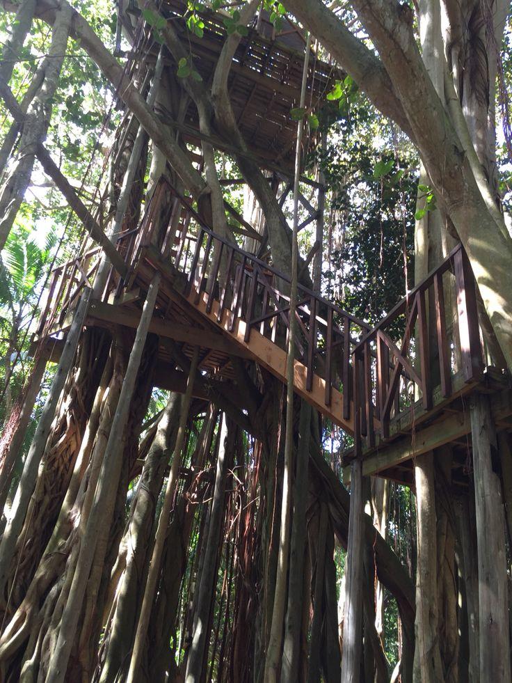 Tree house in Fregate island