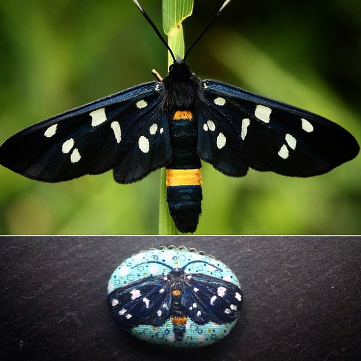 Moth Pendant Necklace - Amata phegea Embroidered Moth - Bohemian Necklace - Multi Strand Necklace - Tassel Necklace by BlackCatCreativeStd on Etsy https://www.etsy.com/listing/456820316/moth-pendant-necklace-amata-phegea
