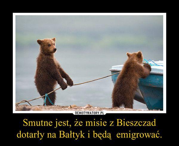 Smutne jest, że misie z Bieszczad dotarły na Bałtyk i będą emigrować.