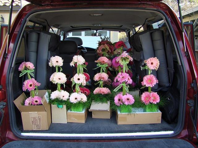 Delivering gerbera daisy table arrangements