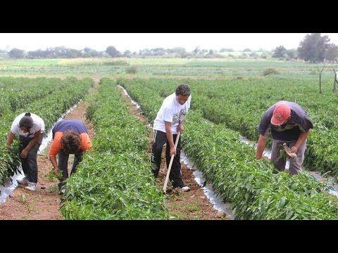 Beneficios de la Diversidad en una Finca Agropecuaria - TvAgro por Juan ...
