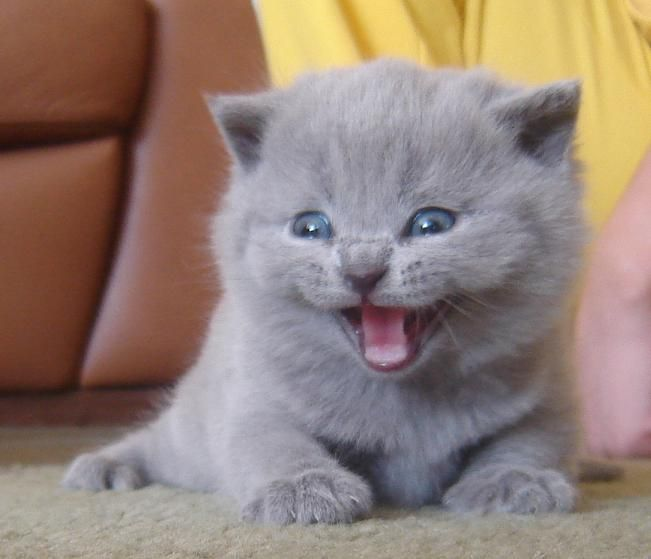 Say Cheese #cute #kitten #cats
