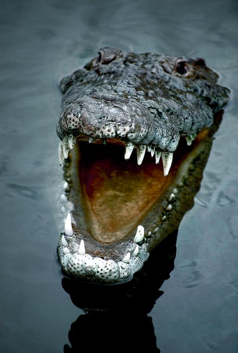 """""""Oh, I'm a little long in the tooth to be much of a threat, don't you think? Can't you see?"""" Rodney, the gap-toothed Croc, said as he flashed his raggedy, ugly smile at the very sweet, slightly plumb, pretty little wife of Peter, Peter Pumpkin Eater. All the while the clever, old, abhorrent reptile was luring Patricia Anne bit by bit alarmingly closer to the water's edge..."""