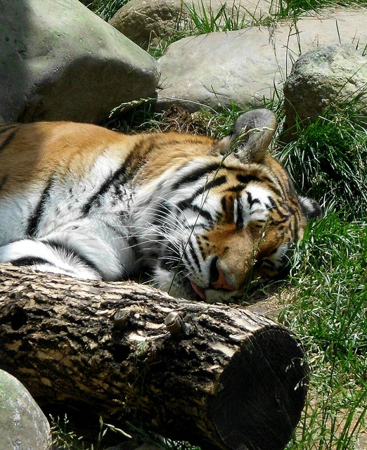 Indianapolis Zoo: 46 Best Images About Indiana On Pinterest