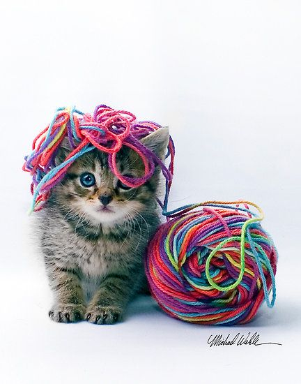 What...  I was just sitting here being a good kitty, when this colorful stuff jumped on me.