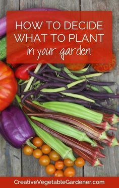 How to think strategically about your garden before buying seeds & plants.