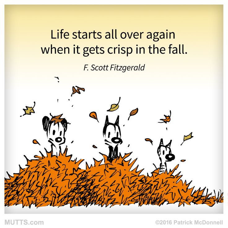 Re-post if you agree! #MUTTSofInstagram #fall #autumn #fscottfitzgerald #inspirationalquotes