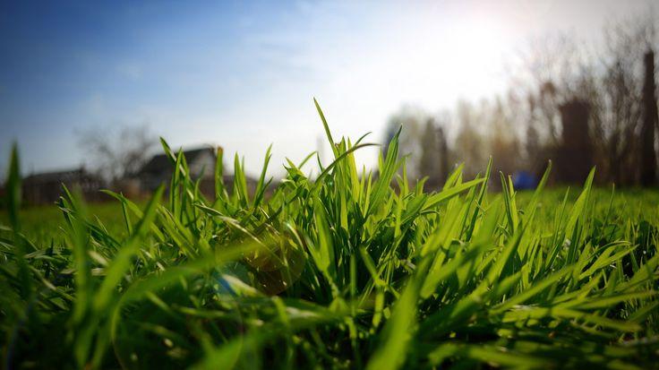 Природа Зеленая трава красивые обои, картинка на рабочий стол