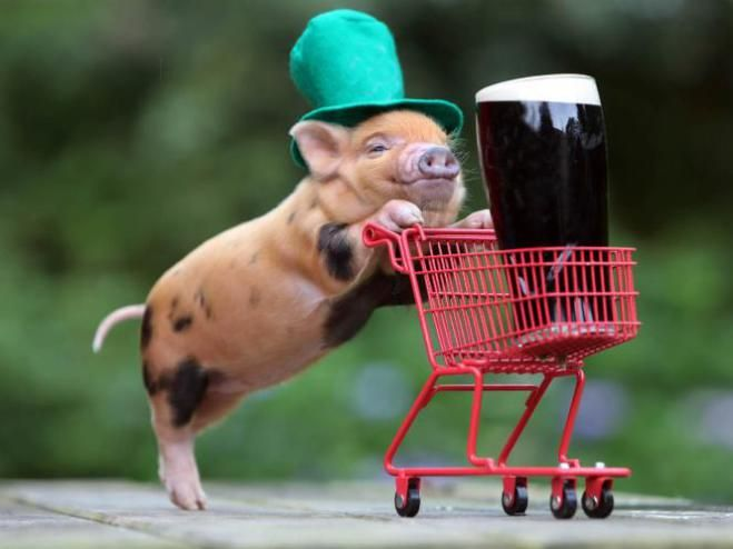 Just out doing some shopping....