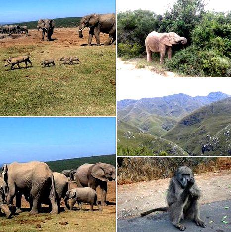 Going on a safari adventure