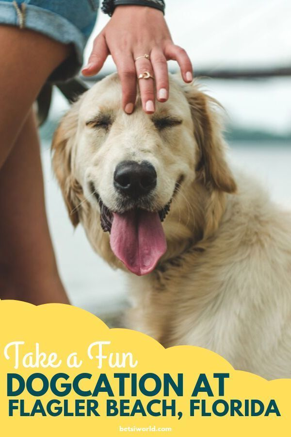 5 Dog Friendly Vacation Hotspots In Florida Dog Friends Florida