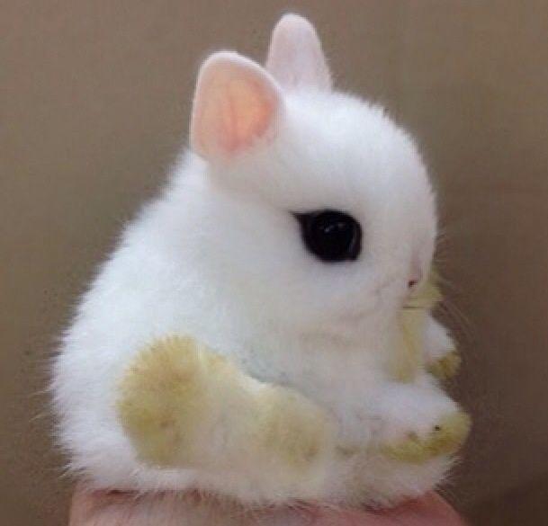 #The cutest bunny ever!!