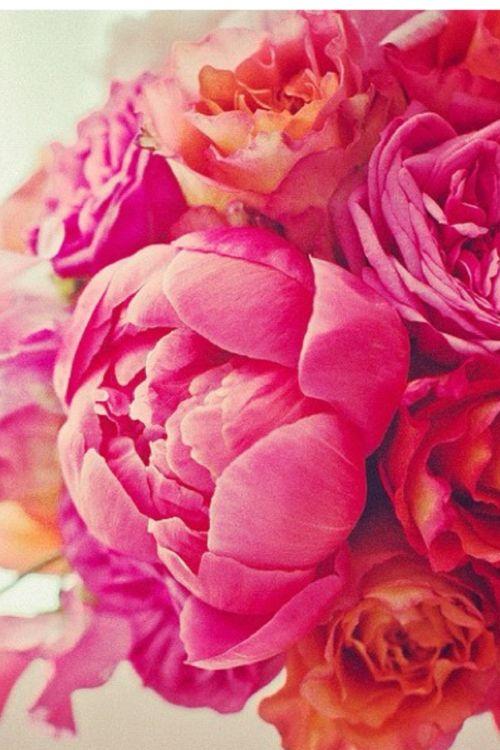 fuchsia, hot pink, orange, red peonies.