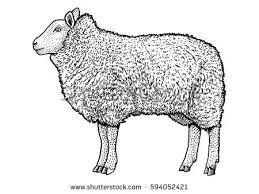 Image result for sheep illustration