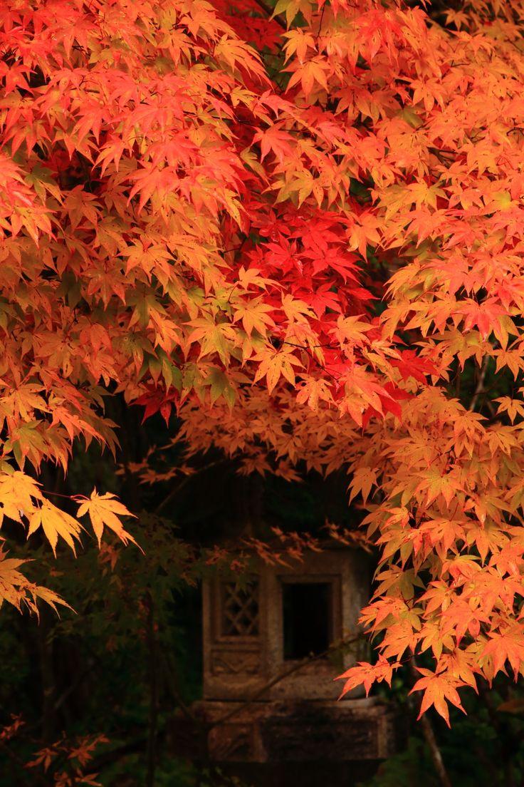 京都西明寺の鮮やかなオレンジ色の紅葉