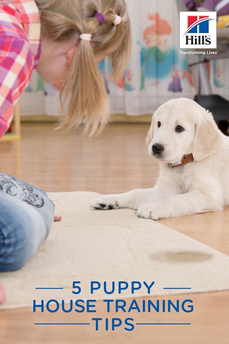 Puppy House Training Hacks Training Your Puppy Puppies Puppy House