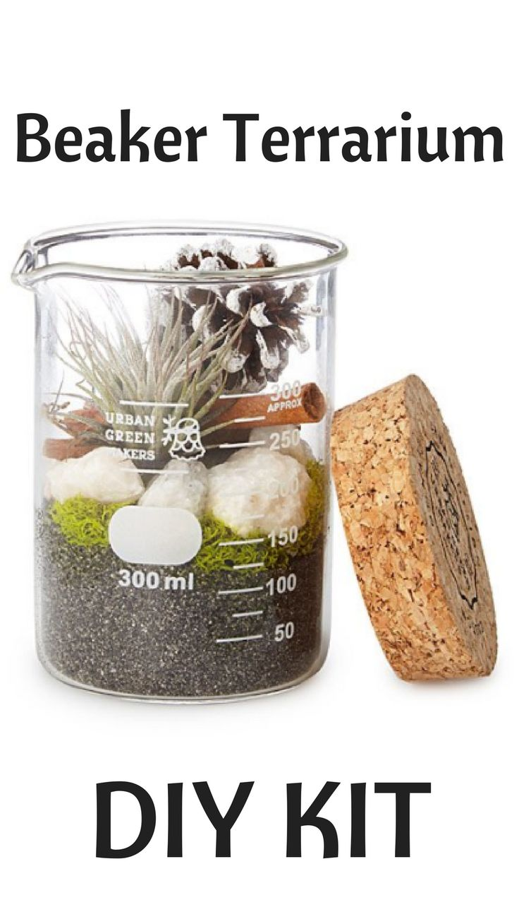 This geek-friendly terrarium kit contains all you need to make an air plant at home in the lab.afflink