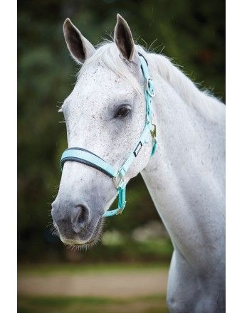 ROMA PASTEL HEADCOLLAR MINT/BLACK