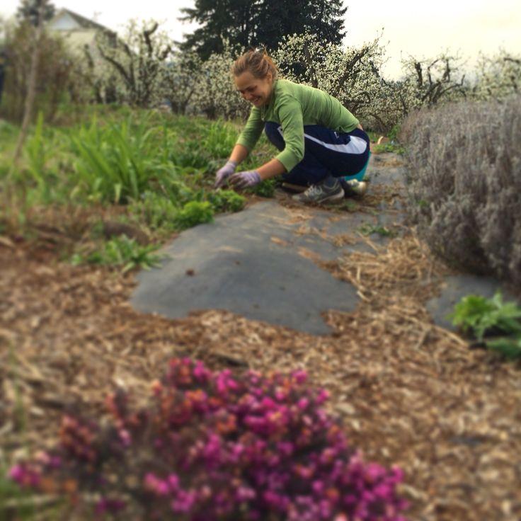Many hands make light work weeding with joy gardening weeding tending workplace organic - Weeding garden make work easier ...