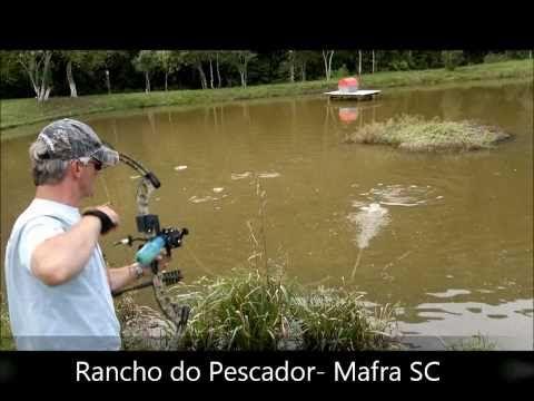 Carpa com arco e flecha - PSE Archery