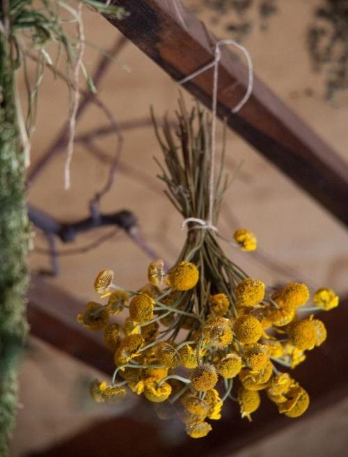 How to Dry Herbs from the New American Herbal: Hanging, Racks, Paper Bag, Microwave, Salt Deco Pizzeria, Healing Herbs, Arte Floral, Drying Herbs, Kraut, Herbal Remedies, Natural Remedies, Herb Garden, Dried Flowers