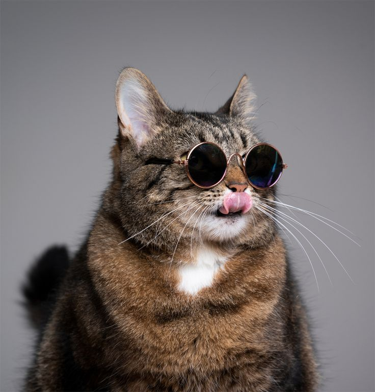 National Sunglasses Day Check Out These 5 Instagram Cats