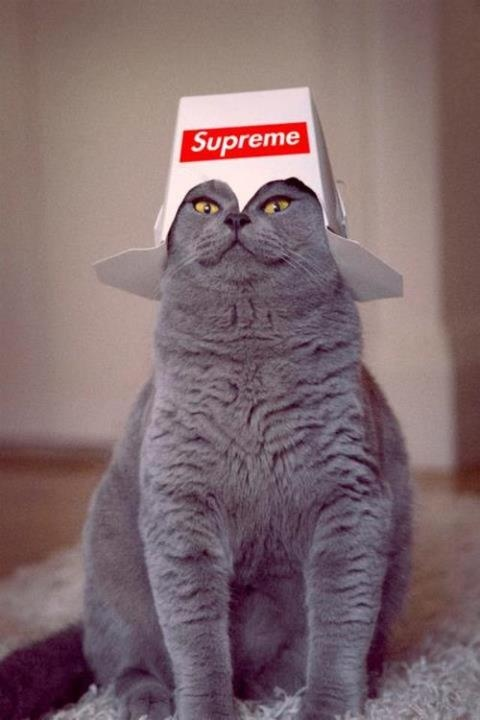 supreme kittyHats, Kitty Cat, Funny Cat, Food, Boxes, Fat Cat, Funny Animal, General Tso, Baby Cat