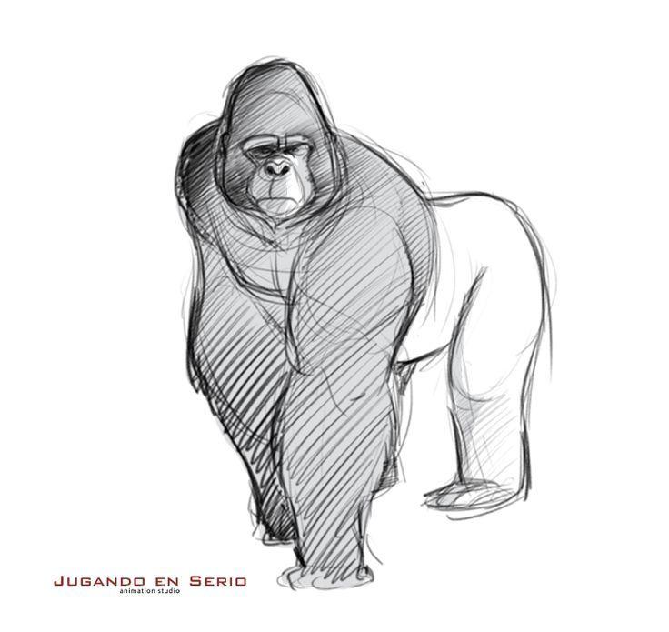 70 best 1st Endever images on Pinterest | Gorilla gorilla, Monkeys ...