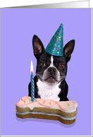 Happy Birthday Boston Terrier Made In America