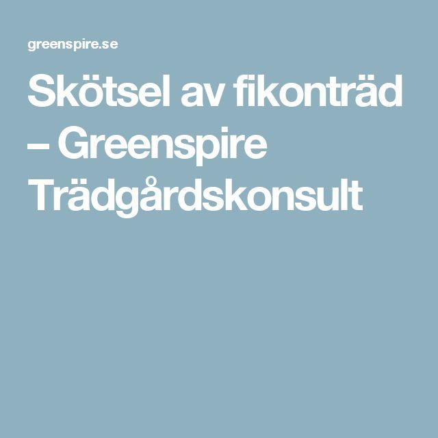 Skötsel av fikonträd – Greenspire Trädgårdskonsult