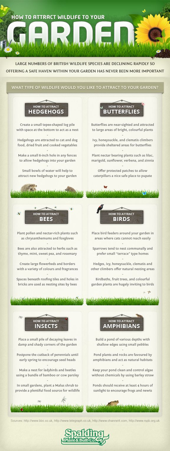 Guide on attracting wildlife to your garden