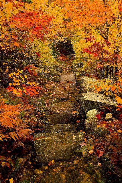 Dorr Mountain Trail, Acadia, Maine