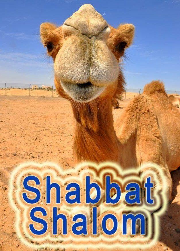 Для, открытки шаббат шалом на иврите