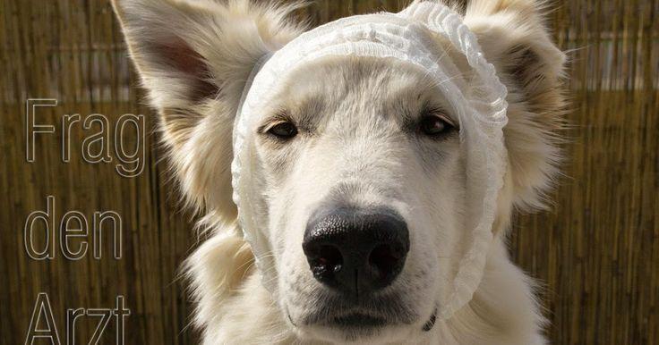 Ein Hundeblog über Tricks lernen, Ernährung, Beschäftigung und die Schilddrüsenerkrankung beim Hund